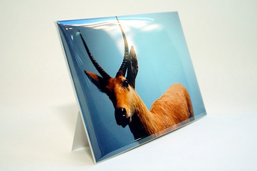 Mailable Photo Frames