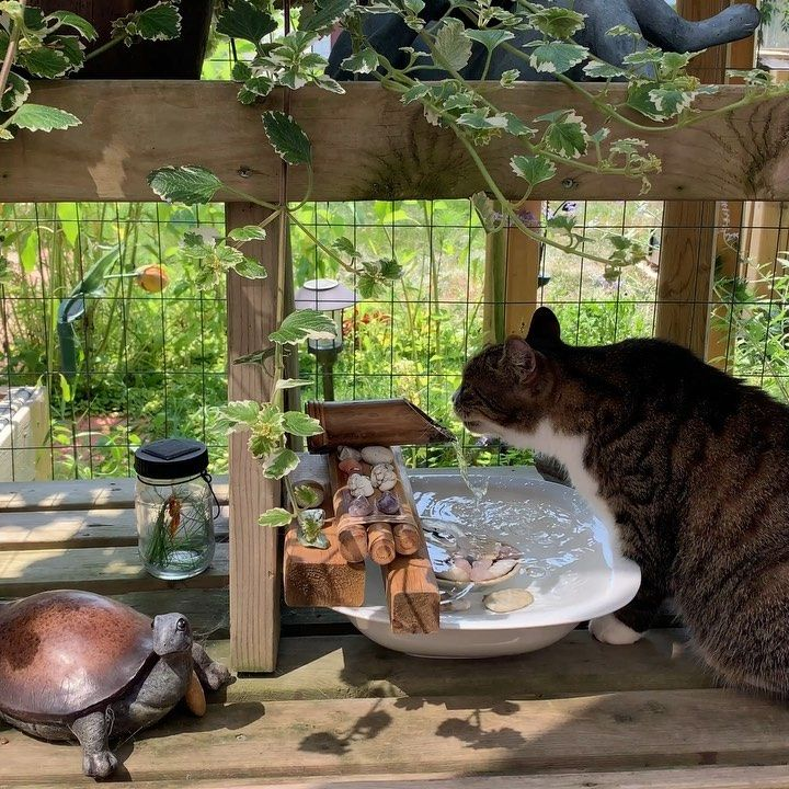 This Easy Diy Water Fountain Hack For Your Catio Garden Provides The Perfect Water Feature With An Ambiance Of Cat Water Fountain Diy Water Fountain Cat Patio