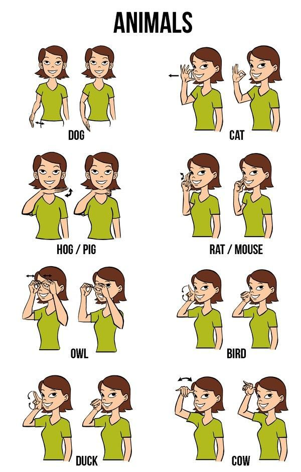 Most children can learn sign language before learning to speak so teaching them some signs can help your child develop their language skills more thoroughly.