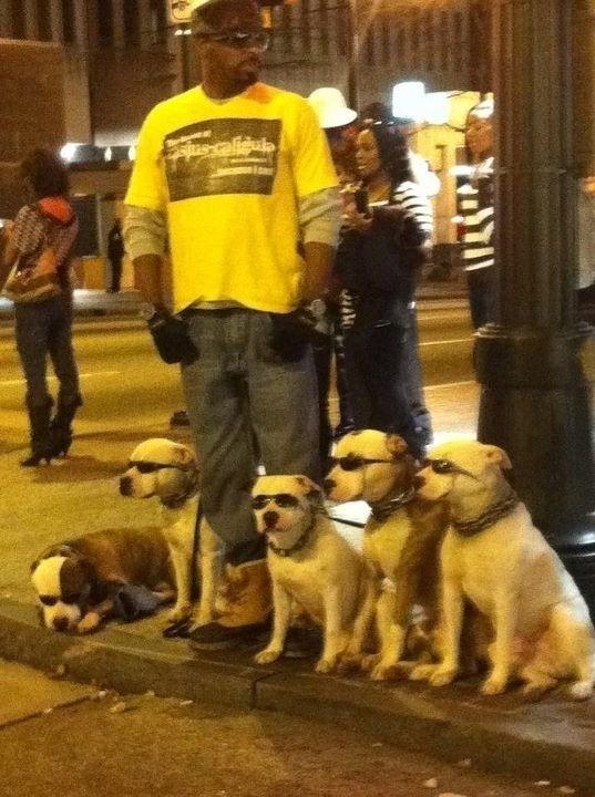THIS GUY. (Dog Walker? No, Badass Dog Walker.)