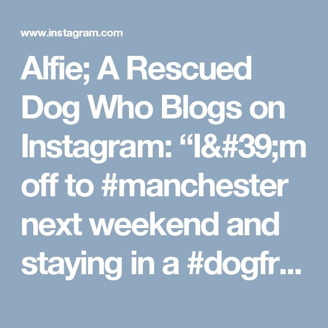 """Alfie; A Rescued Dog Who Blogs on Instagram: """"I'm off to #manchester next weekend and staying in a #dogfriendly #hotel seeing my #cuz Max get a baptism. Then partying the night away…"""""""