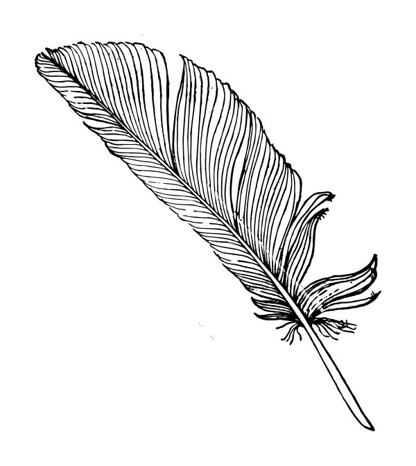 Line Drawing Of Quill : Best looks like an engraving images on pinterest