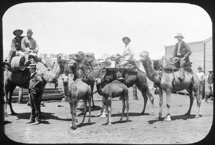 090464PD: Four men on camel-back, Coolgardie, 1894.  http://encore.slwa.wa.gov.au/iii/encore/record/C__Rb4715141__SAfghans%20--%20Western%20Australia%20--%20Coolgardie%20--%20Photographs.__P0%2C9__Orightresult__X3?lang=eng&suite=def