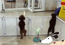 Happy dog getting picked up at daycare.