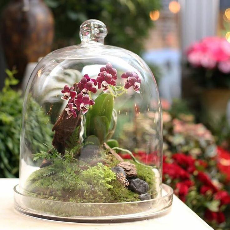 """345 Likes, 3 Comments - agnès b. asia official (@agnesb_asia) on Instagram: """"#agnesbfleuriste Simply make your day peaceful by having an elegant glass terrarium at your home or…"""""""