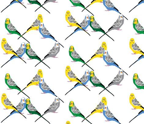 how to get your budgies to mate