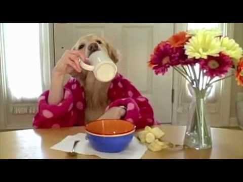 La Colazione Dei Cani !!! - Video Divertenti - Guardalo