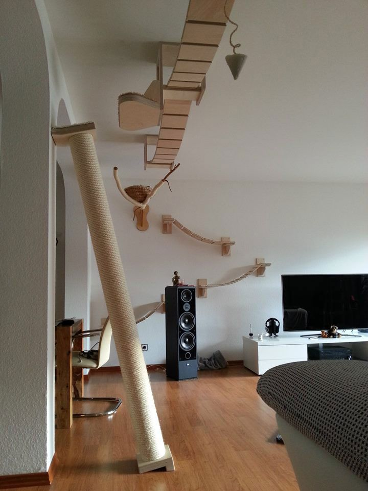 ceiling furniture for cats by Goldtatze  ~ This will be one of the first things I buy when I win the lottery.....