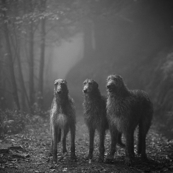 Photo by Truls Bakken www.dogsbestman.com