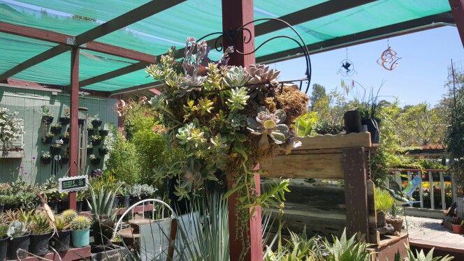 Hanging succulent design!