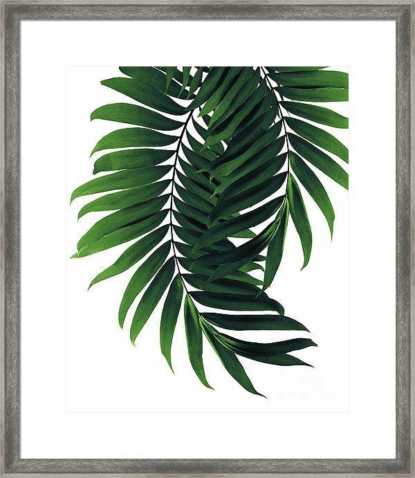 28+ Framed palm leaf pictures inspirations