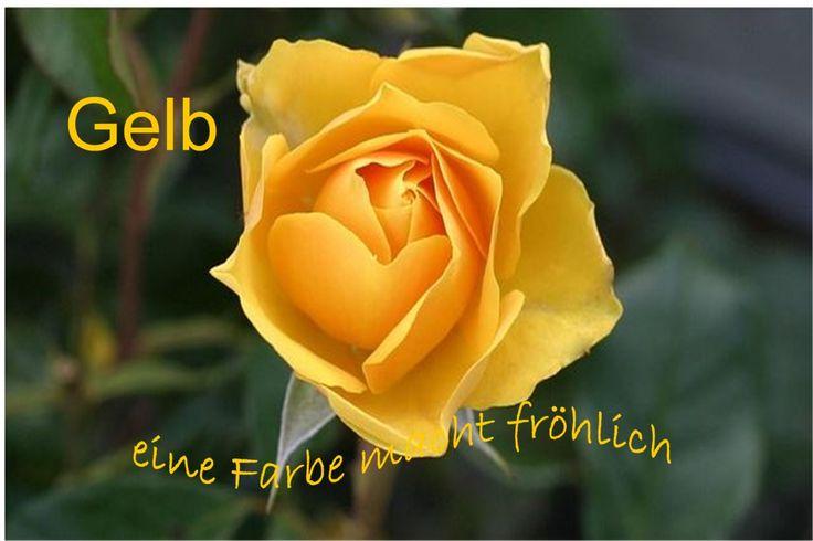 """Bildquelle: blizniak / http://pixabay.com/de/rose-blume-gelb-gelbe-rose-113735/   The """"Yellow Rose of Texas"""". Die goldgelbe Sonne. Gelb als Signalfarbe und Symbolfarbe bedeutet uns viel. Lesen Sie mehr Text auf der Webseite unten."""