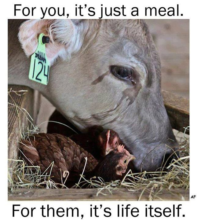 eating meat is cruel and monstrous Why meat is moral, and veggies are immoral by robin hanson, july 10, 2002  you are in a grocery store, and thinking of buying some meat you think you know what buying and eating this meat would mean for your taste buds, your nutrition, and your pocketbook, and let's assume that on those grounds it looks like a good deal.