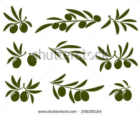 olive branch set on white background