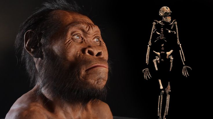 Within a deep and narrow cave in South Africa, paleoanthropologist Lee Berger and his team found fossil remains belonging to the newest member of our human f...
