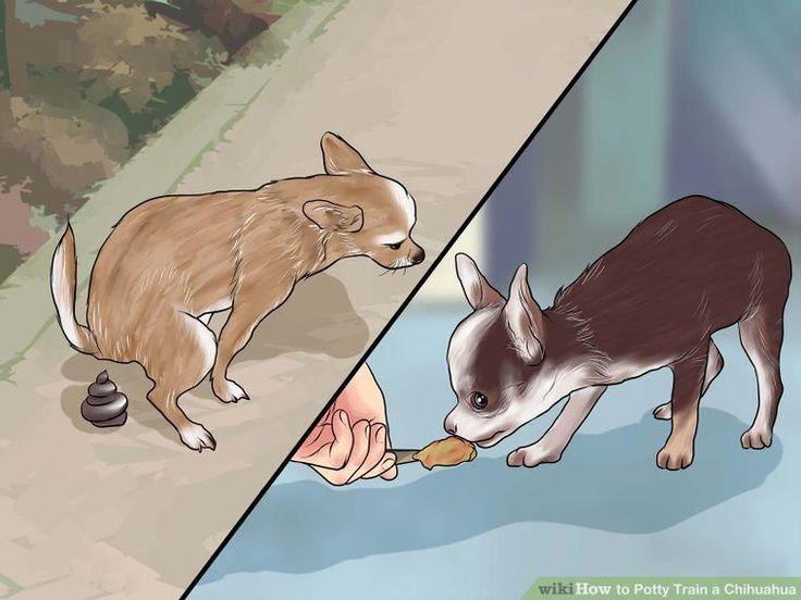 Image titled Potty Train a Chihuahua Step 1