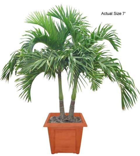 17 Best Images About Plants For Hotels Great For Indoor