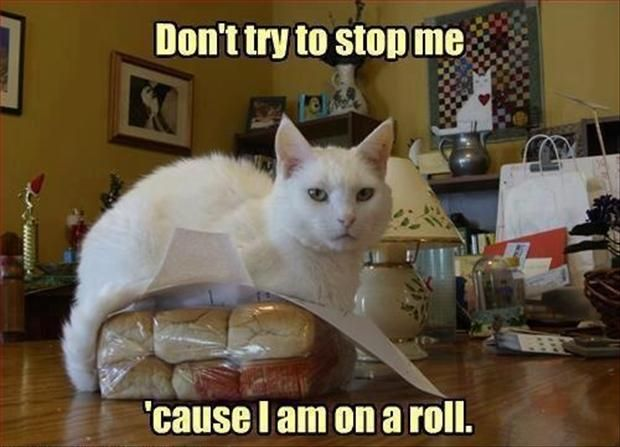 * * CATTY PUNNY! LOL                                                                                                                                                                                 More