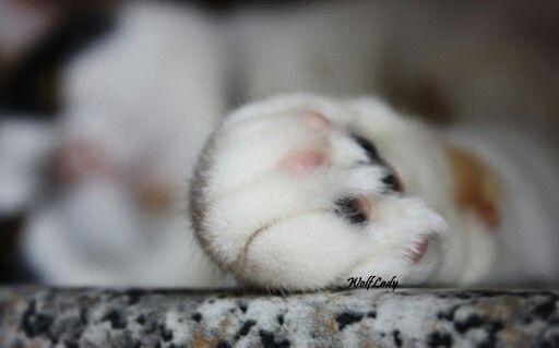 Gommini ciccioni. Cloe's paw. @wolflady90