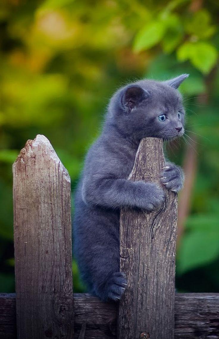 Valokuva Cute kittens,Söpöjä eläimiä ja Eläinten poikaset