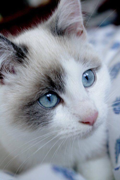 .beautiful eyes
