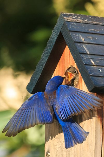 """TAB, Famous Flower of Manhattan lyrics 