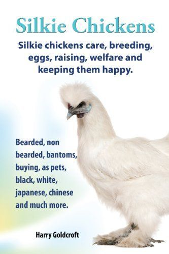 Silkie Chickens. Silkie Chickens Care, Breeding, Eggs, Raising, Welfare and Keeping Them Happy, Bearded, Non Bearded, Bantoms, Buying, as Pets