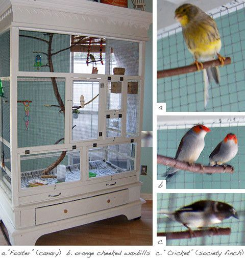 A roomy and beautiful aviary made oit of an upcycled armoire. Constructed for finches but would work well for other birds like canaries, doves, etc. If I were going to adapt this, I would make the cage doors larger so the aviary is easier to clean.