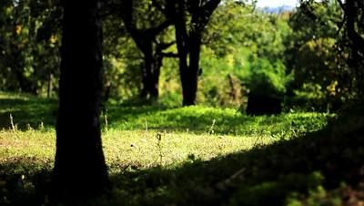 Here's a free stock video footage of a bright green forest glade in the light. You could use this stock video for your next project - soothing footage of a glade in summer time. Very calming!