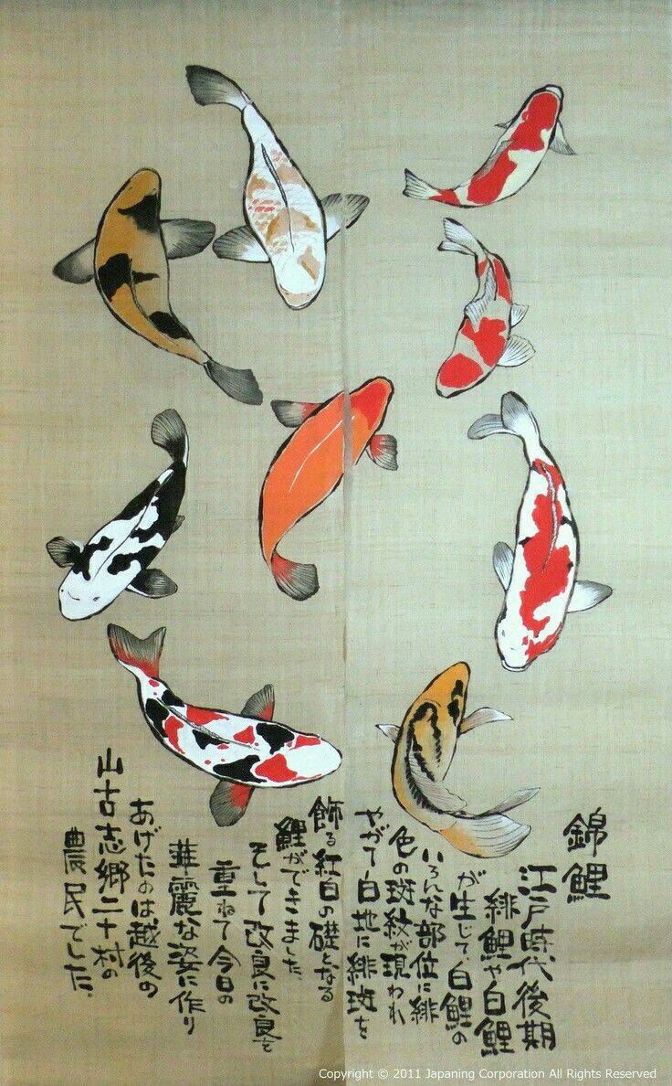 Koi fish carp arts 504 pinterest for Koi fish australia