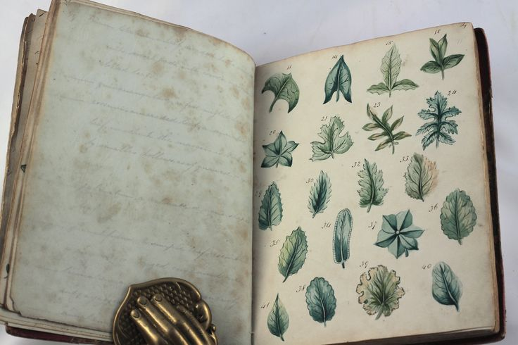 Old Books  Things.., wonderful antique botanical manuscript illustrated with original water colours dated 1823