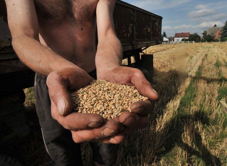 Bruksela chce szerzej otworzyć polski i unijny rynek na produkty rolne z Ukrainy. Rolnicy i producenci żywności protestowali już przy poprzednich decyzjach lekko te drzwi uchylających. Teraz zapowiadają bardziej zdecydowane działania. - Zabije to naszych producentów pszenicy, rzepaku i kukurydzy. Jeśli nasz rząd tego nie powstrzyma, to znów dojdzie do najgorszego. Pójdziemy na granice i będziemy wysypywać pszenice z wagonów - przestrzega Sławomir Izdebski przewodniczący OPZZ Rolników i…
