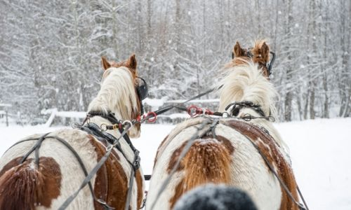 Telluride Colorado Sleigh Rides - freezing cold, but it was a must do for us!!