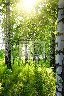 Stickers season, ornamentaal, stengel - zomer berkenbossen met zon ✓ Brede keuze van materialen ✓ Het product aan je behoeften aangepast ✓ Bekijk de opinies van onze klanten!