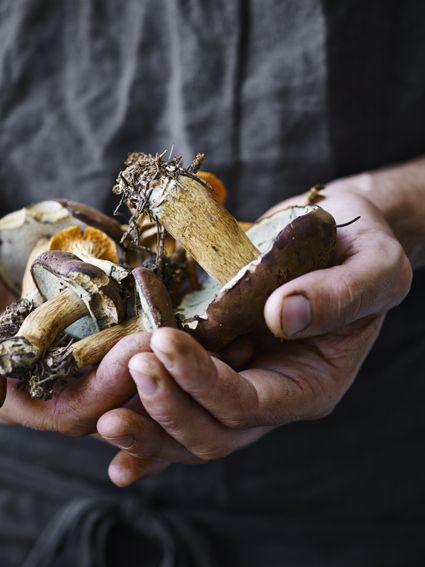 handful of mushrooms