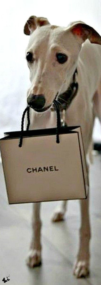 .....  He  have  Taste  for  great  stuff  Only In the streets of Chanel, charming he does it well   >8 )