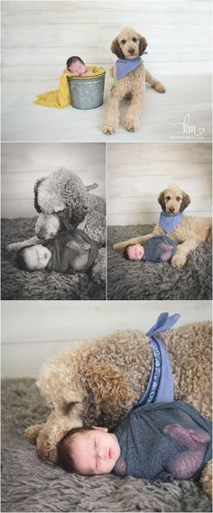 newbor and puppy - full sized poodle and newborn baby boy pictures