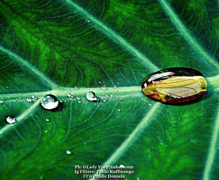 Tears of heaven...#cibo #food #foodies #foodnetwork #foodandwine #foodstyling #foodblogger #foodbeast #foodlover #foodstagram #foodphoto #foodshare #foodgawker #foodislife #fooddiary #foodism #foodiegram #foodaddict #foodprep #foodpost #foodoftheday #healthyliving #foodtrip #leaf #vegan #veg #buongiorno #goodmorning #leaves