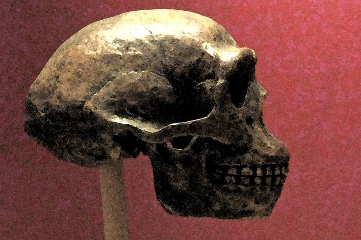 The Peking Man's bones changed everything we knew about the earliest humans—then vanished in the chaos of post-war China. Yet there's a chance we soon might unearth them a second time.