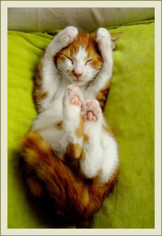 Such cuteness!
