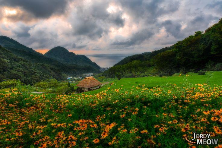 Ishibu Rice Fields // izu peninsula ideas