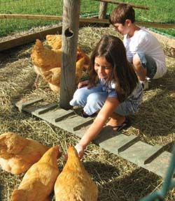 april may 2009 issue of backyard poultry backyard poultry magazine