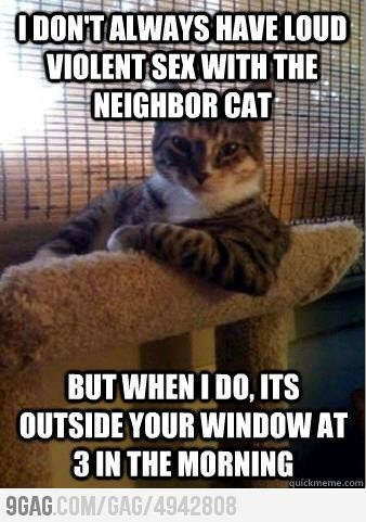 Every. F**king. Time.: Like A Boss, Funny Cat, I Don'T Always, So True, Funny Stuff, Interesting Cat, Kitty, Animal Memes, Cat Memes