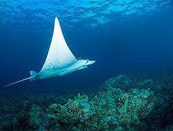 Hanauma Bay Snorkeling Prices | Oahu Outdoor Adventure | Honolulu Activities | Honolulu Outdoors