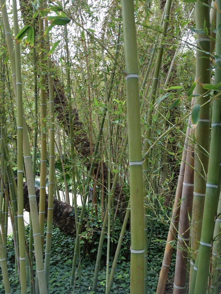 183 mejores im genes sobre alicante en pinterest viajes - Bambu planta exterior ...