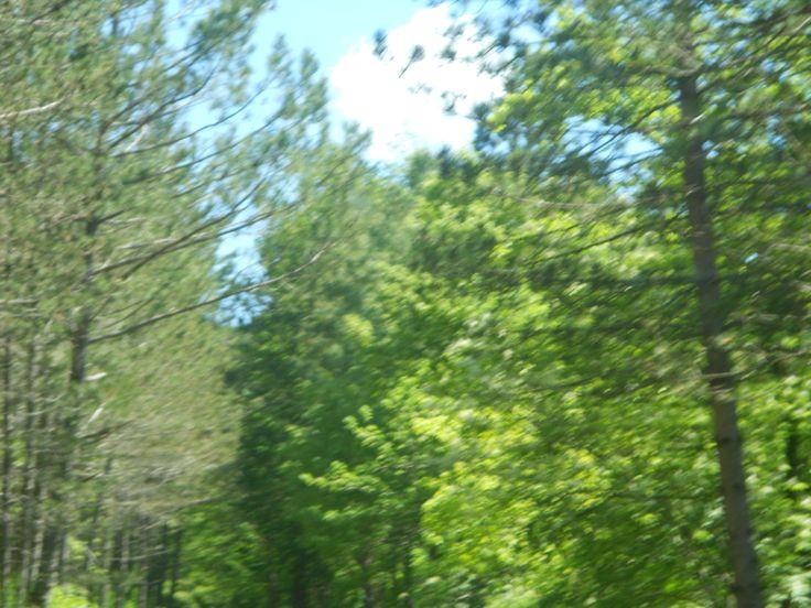 Le fronde degli alberi
