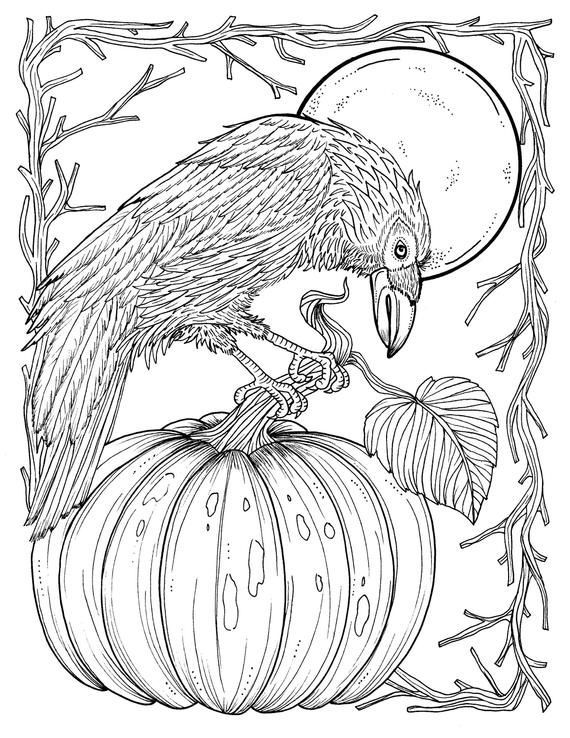 Fall Crow Digital Coloring Page Thanksgiving Harvest Adult