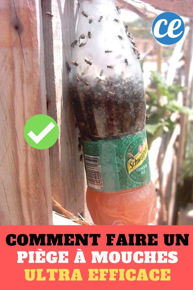 Comment faire un piège à mouches fait maison avec une bouteille