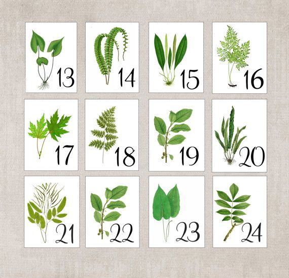 Estas tarjetas de mesa tienda provienen de vintage ilustraciones botánicas. Cada tarjeta es una hermosa pieza de arte y se vería hermosa adornan la mesa.  DESCRIPCIÓN:  Estas hojas ilustradas vintage extrajeron digitalmente y luego se transfiere a la cartulina blanca. Este listado está para una variedad de las ilustraciones de la hoja verde que incluye un montón de helechos. No hay dos tarjetas será igual.  Estas tarjetas se venden individualmente, por lo que se puede pedir el número exacto…