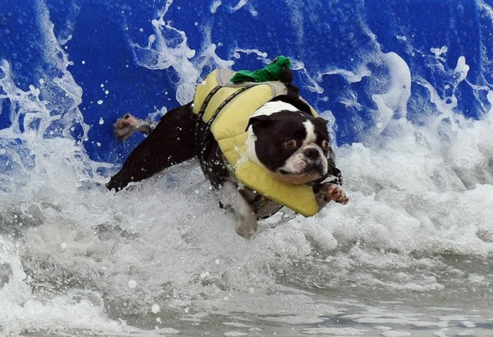 Surfer Dogs.